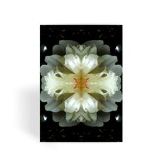 Peony Reflections Greeting Card