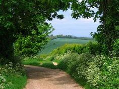 pagewoman: South Downs Way,Alfriston,Sussex,England.Gardener Country lane with Queen Anne's Lace (Cow parsley) England Countryside, British Countryside, Days Out In England, Country Life, Country Roads, Country Living, Homes England, Summer Scenes, Long Way Home