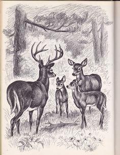 vintage kids book Bambi's Children sequel to by OnceUponABookshop