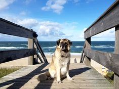 Paul am Meer Am Meer, Dogs, Animals, Hang In There, Animales, Animaux, Doggies, Animal, Animais