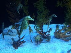 Our All Pond Solutions team also captured this amazing photo of Seahorses today!