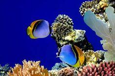 Kho Tao Scuba diving Thailand