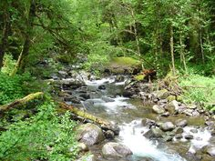 North Fork Siletz at Valley of the Giants, Falls City, Oregon  *dansuehath
