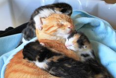 May you always be surrounded by love.  Goodnight and sweet dreams! #CatCentric