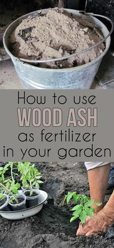How to use ashes as fertilizer #Organic_Gardening #organicgarrdens