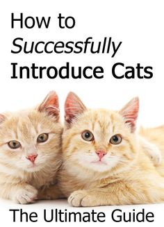 Cat toilet training in easy steps: Toilet training your cat is an easier task than you might think. Several techniques can be used for training your cat to use How To Introduce Cats, Introducing A New Cat, Cute Cats, Funny Cats, Cat Safe Plants, Warrior Cats Books, Chesire Cat, Cat Info, What Cat