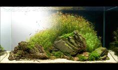 norbert sabat aquarium - Google Search