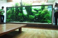 See more in the All Things Aquaria board: https://www.pinterest.com/JibinAbraham/all-things-aquaria/  Takashi Amano's old home tank is still awesome