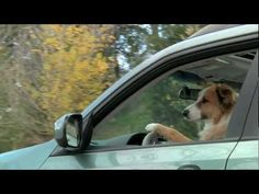 "Subaru Dogs - ""Jack knifed"""