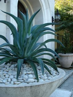 Success Stories Small Spaces - Gardens to Love Florida Landscaping, Outdoor Landscaping, Outdoor Plants, Outdoor Gardens, Potted Plants, Front Garden Landscape, Landscape Design, Garden Design, Succulents Garden