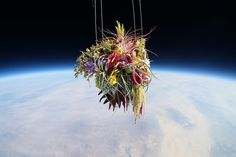 Japanese Artist Sends Bonsai Tree into Space
