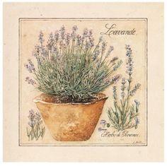 herbs de provence 2- Laurence David