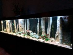 To achieve the effect of depth - black foil & set of standing logs #aquadecor #aquascaping #malawicichlids #tanganyikacichlids  #3dbackgrounds #aquarium #customaquarium #cichlids #cichlidfish #cichlidsofinstagram #fish #fishtank #instafish #frontosa #tropheus #mbunacichlids #haps #tropicalfish #aquaria #freshwateraquarium #watertank #angelfish #discusfish #plantedtank #plantedaquarium #freshwatertank #aquariumequipment #aquascape #aquariumideas #aquascapeideas