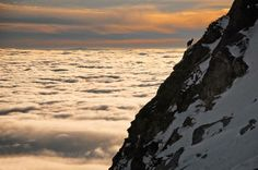 Lone Chamois Above The Clouds
