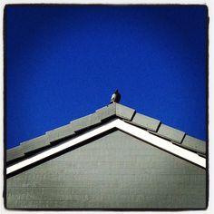 Pigeon problem...