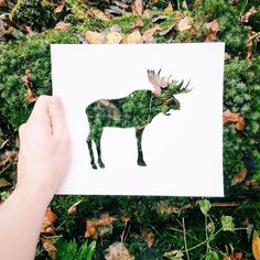 Artist Nikolai Tolstythoughtfully joins forces with Mother Nature to produce artwork displaying an all-natural twist. Using paper as his medium of choice, the artist carves out a sleek animal silhouette on each sheet and proceeds to photograph the said cutout, superimposed on the world around him. Tolsty brings his elegant outlines into the natural world, …