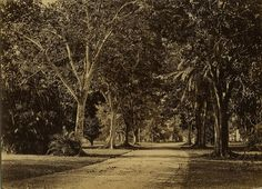 Country Road, Trinidad | by The Caribbean Photo Archive
