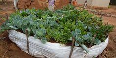 Kageyo Garden Project Update – 4 months later | Vita Gardens