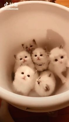 Cute kittens, are you kidding me. They're adorable! Cute Funny Animals, Cute Baby Animals, Animals And Pets, Funny Cats, Cute Kittens, Cats And Kittens, Siamese Cats, Kittens Cutest Baby, Little Kittens