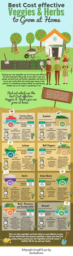 Best cost effective veggies and herbs to grow at home infographic.