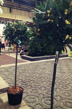 Kiva terassin kuvio Sidewalk, Lifestyle, Garden, Plants, Garten, Side Walkway, Lawn And Garden, Walkway, Gardens