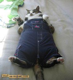 Funny fat cat.