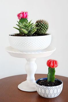 Cactus And Succulent Gardens - using cute kitchen dishes