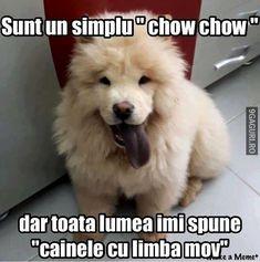 Sunt un simplu Chow Chow Chow Chow, Funny Jokes, Link, Dogs, Cute, Husky Jokes, Pet Dogs, Kawaii, Doggies