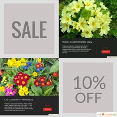 10% OFF on select products. Hurry, sale ending soon!  Check out our discounted products now: https://orangetwig.com/shops/AAB5v98/campaigns/AACeg99?cb=2016004&sn=RetroDIYandPlants&ch=pin&crid=AACeg3q&utm_source=Pinterest&utm_medium=Orangetwig_Marketing&utm_campaign=SPRING_GARDEN_PLANTS