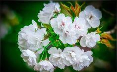 rama, Flores, flora