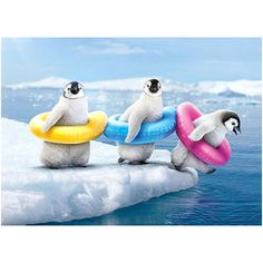 """Our All In Penguins Birthday card features a trio of adorable Emperor Chicks ready to take their first dip while wearing colorful colorful tubes. The inside of this 4"""" x 6"""" card reads """"We're All In -"""