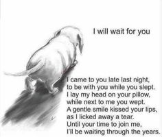 Dog poems - Beautiful thought I am crying for my Jake Until I can hold you again dachshund I Love Dogs, Puppy Love, Pet Loss Grief, Loss Of Dog, Dog Poems, Poems About Dogs, Quotes About Pets, Pet Remembrance, Pet Memorials
