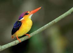Bird - lovely image
