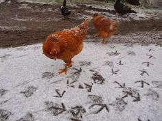 La Charvière: Animal Farm....