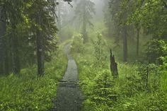 Mountain path  by zembrzuski