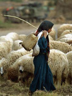 An Iraqi Shepherd, a Young Girl, Herds Her Sheep - Photographic Print