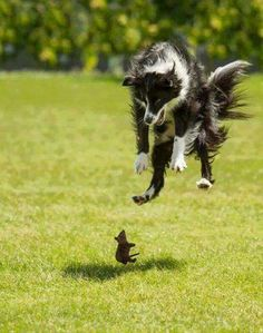 Lets see which photos were the most perfectly timed photos of this year. Lets see which photos were the most perfectly timed photos of this year. Love My Dog, Puppy Love, Animals And Pets, Funny Animals, Cute Animals, Scary Animals, Wild Animals, Funny Animal Pictures, Dog Pictures