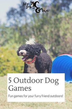 It's that time of the year where the kids and the dogs want to be outside. And let's be honest, we want them outside! Here are five fun outdoor dog games to play with your furry friend.