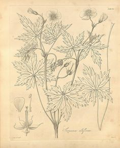 Flora boreali-americana, or, the botany of the northern parts of British America v.1