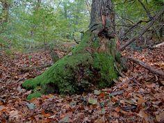 The woods around Carpugnino (Novara, Italy)