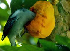 Encanto Caboclo: P a l a v r e a n d o...      : Fotografia: Nature...