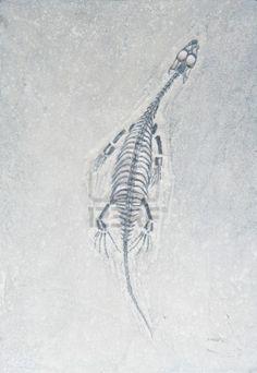 small dinosaur fossil