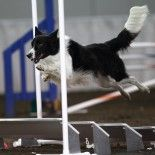 Dog Agility Blog Event, 9/3/14: Outside the Ring | Dog Agility Blog Events
