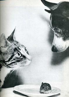 Cat, mouse and dog • photo: Jytte Bjerregaard Muller (1955)