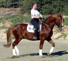 Frederiksborg Horse Farm Presents Frederiksborg Stallion Emperor