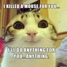 Funny Animal Pictures, Funny Animals, Cute Animals, Random Pictures, Funny Horses, Smiling Cat, Animal Memes, Animal Quotes, Cat Memes