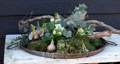 Succulent Arrangements, Floral Arrangements, Succulents, Deco Floral, Floral Style, Diy And Crafts, Easter, Table Decorations, Bulb