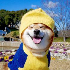 I took a walk for the return of the hospitalI took a walk and ate snacks and became cheerfullyAn ear became well✨Thank you for your concern✨病院帰りにお散歩してきたよ〜散歩しておやつ食べて機嫌治った(๑́•∀•๑̀)ฅ耳もカキカキしてないから大丈夫そう!皆さまコメントありがとうございます〜₍₍ ( ๑॔˃̶◡˂̶๑॓)◞♡#徳島 #文化の森 #柴犬 #べりやん #berry #shiba #shibainu #doge #shibainumania #shibastagram #instadog #instashiba #ぷにっと部 #口角キュキュッと部  #チーム俺様 →部員絶賛募集中 #shiba_snap #proudshibas