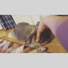 """Handmade """"Oeuf""""さん(@oeuf_design)のInstagramアカウント: 「食後のリラックスタイム🐰☘️ #うさぎ #幸せな時間 #rabbit #食後の楽しみ #リラックスしすぎ」"""