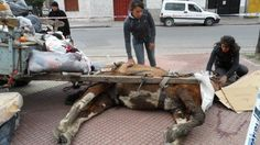 Legislate for the total ban on the use of animals for work load.